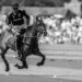 Palo Alto Polo Approved & Certified by Argentine Polo Asoc.